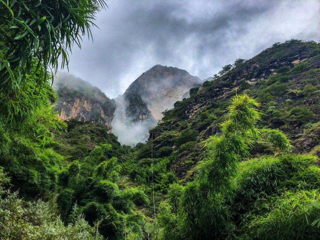 Brouillard et bambous