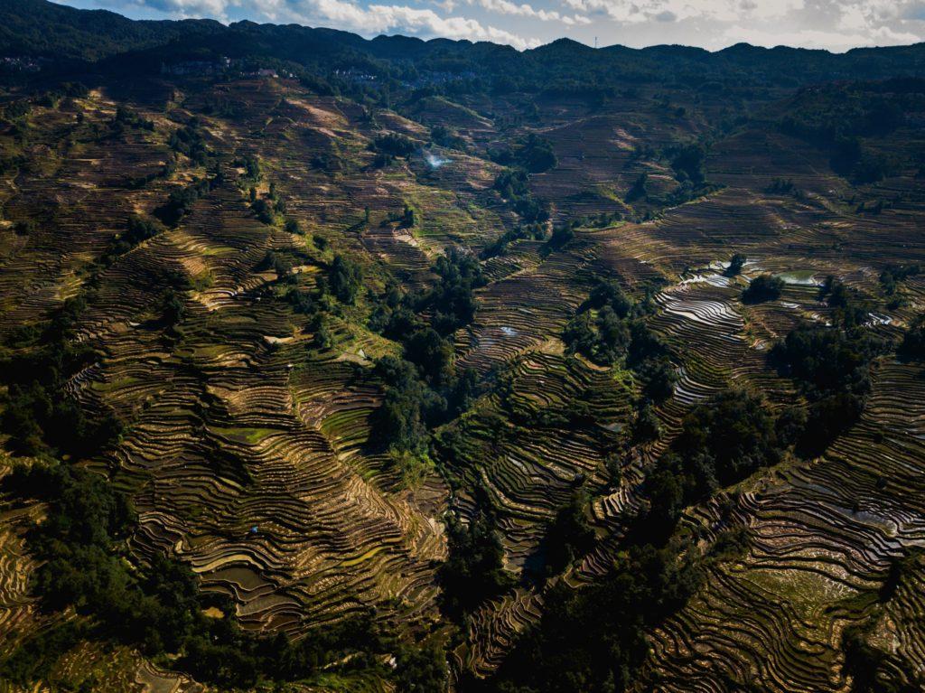 Les rizières vue de drone