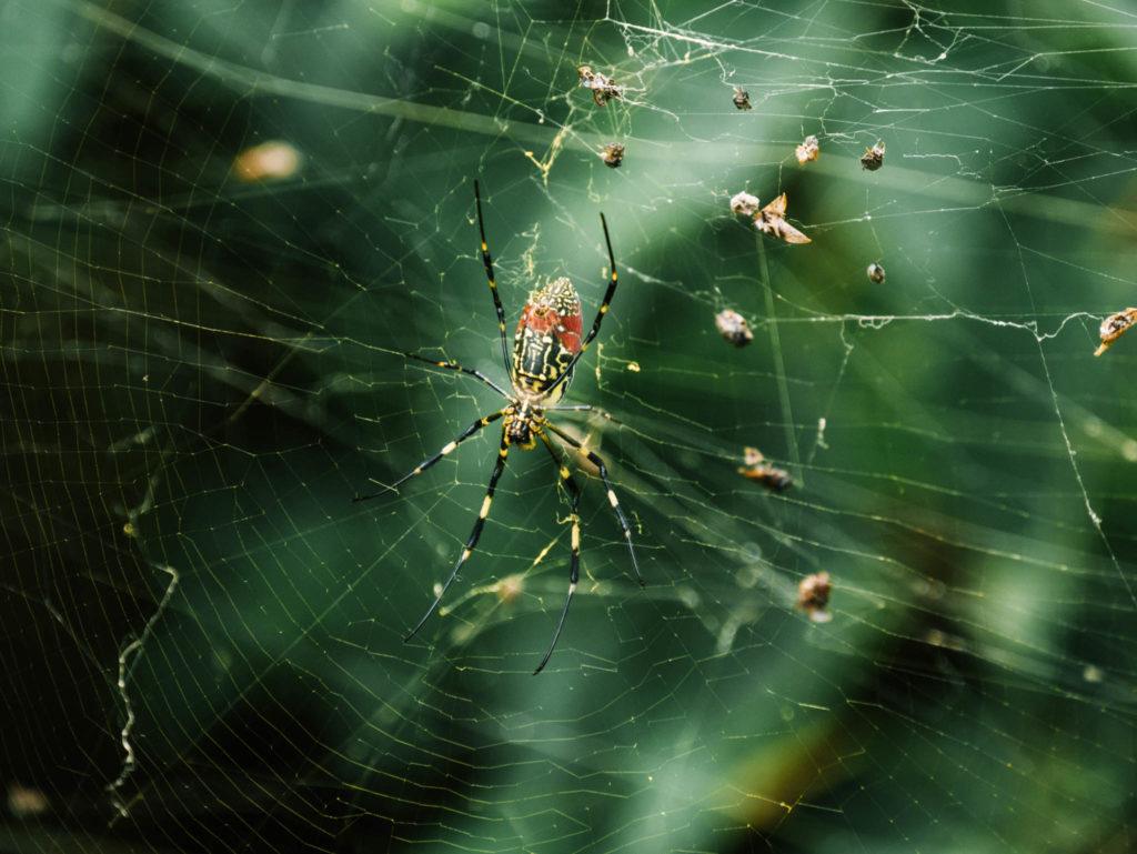 On rigole pas avec les araignées ici
