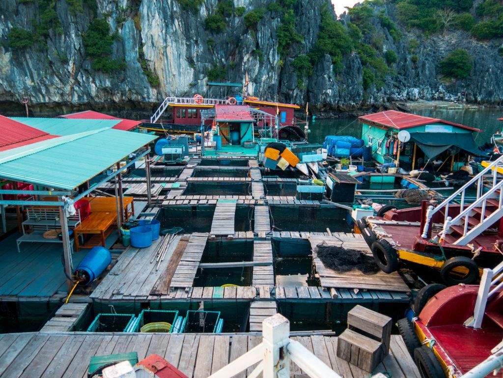 Une ferme à poissons