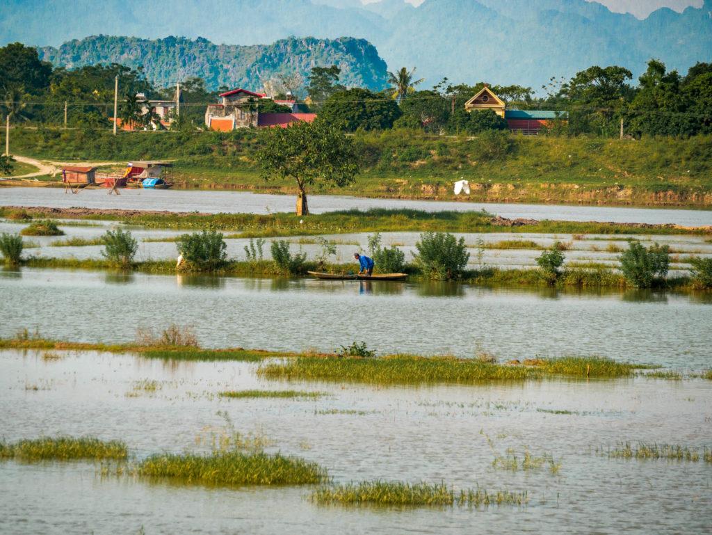 Les rizières le long de la route