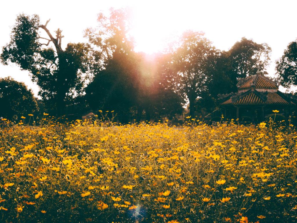Coucher de soleil dans les jardins de la citadelle