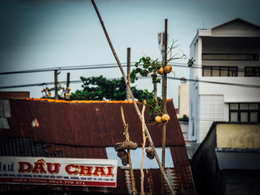 Les vendeurs accrochent des fruits sur des bambous pour montrer qu'ils ont des produits à vendre