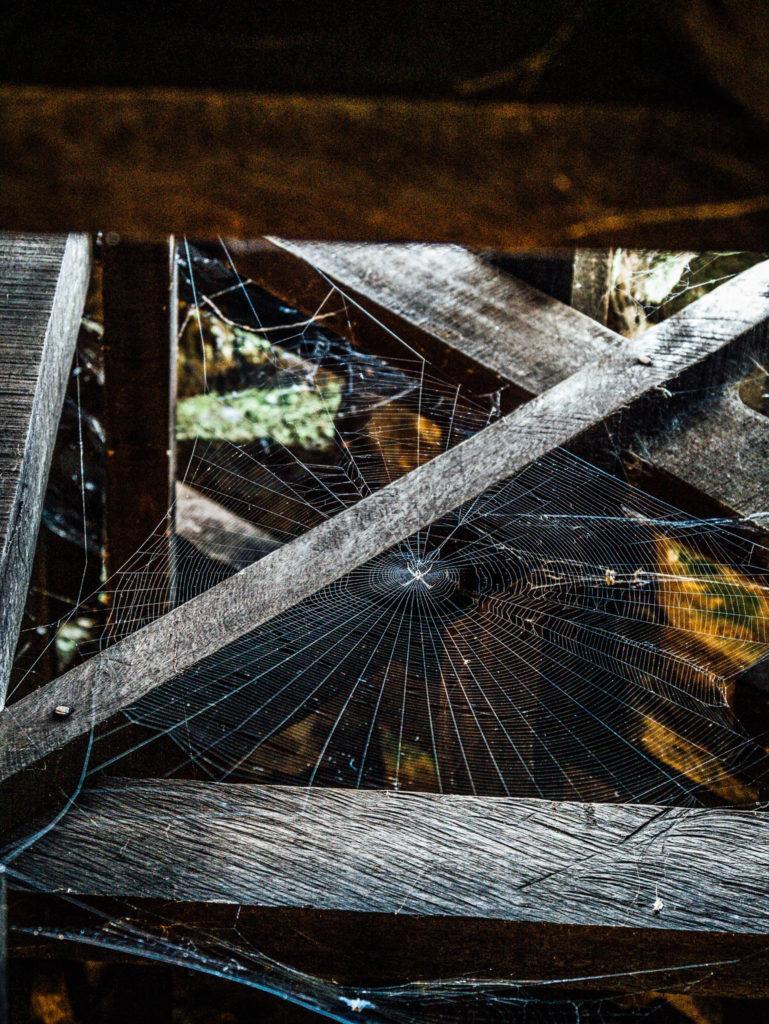 Les araignées ont de la place dans les temples