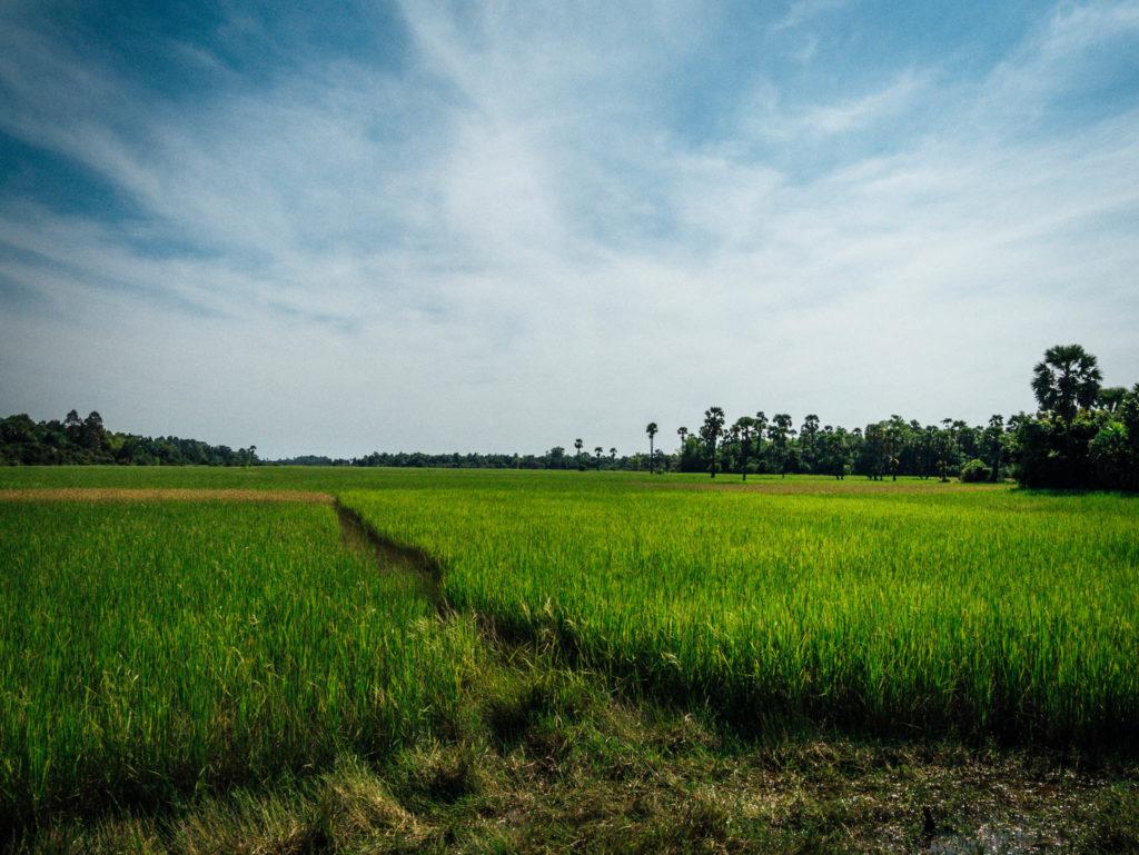 Les rizières entre deux temples