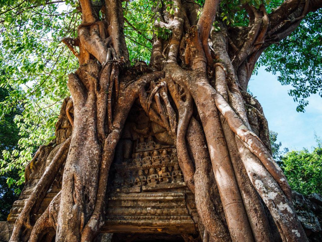 Un temple englouti par un arbre