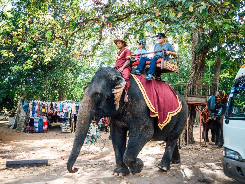 Certains visiteurs font la balade à dos d'éléphants.