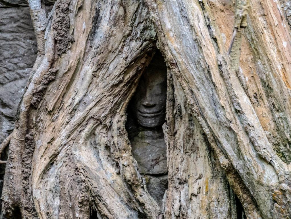 Un bouddha enseveli par les racines dans le temple de Ta Prohm