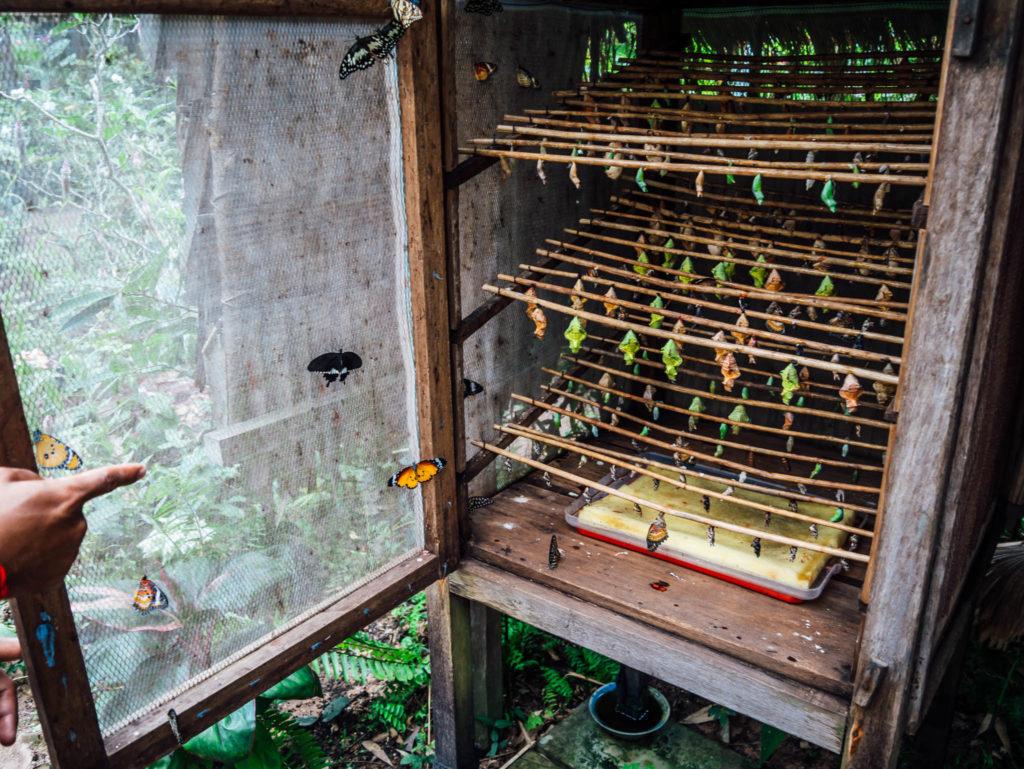Les cocons sont stockés pour être protégés des prédateurs