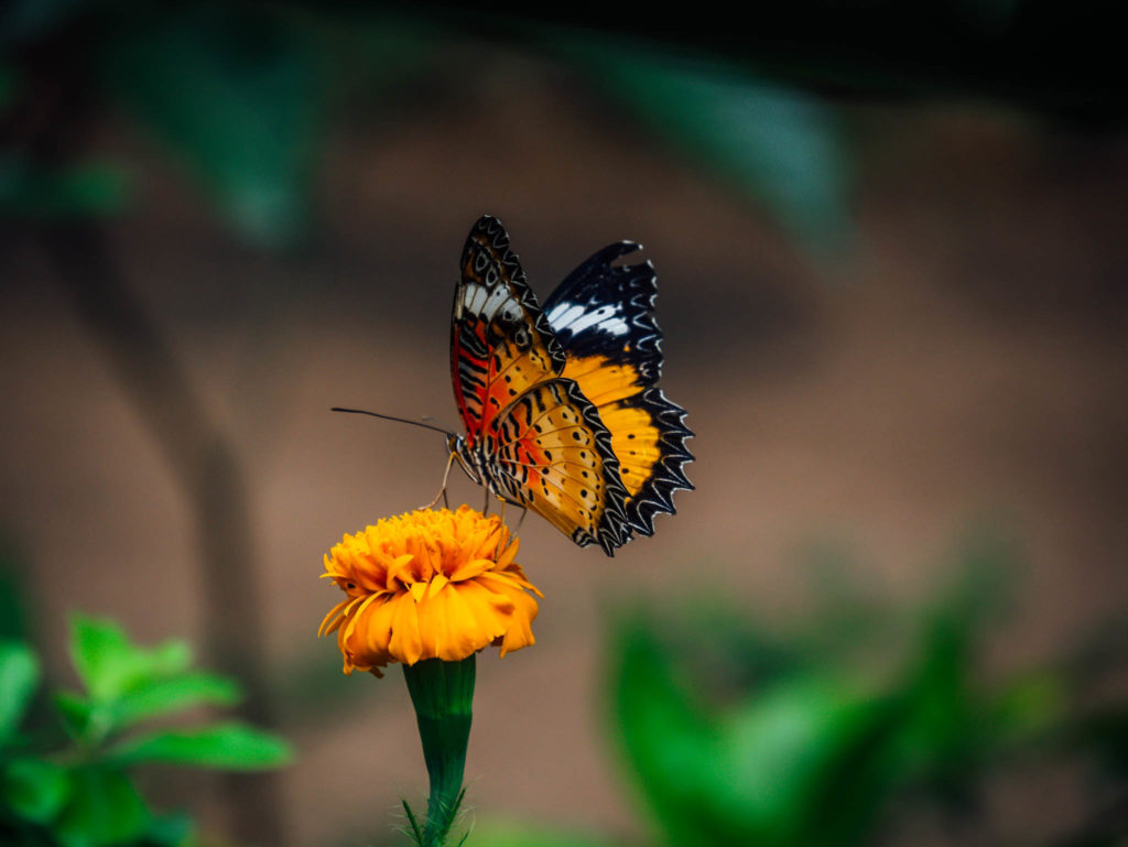 Un papillon sur une fleur dans la ferme