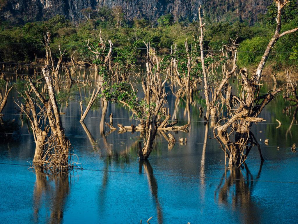 Des arbres dans l'eau