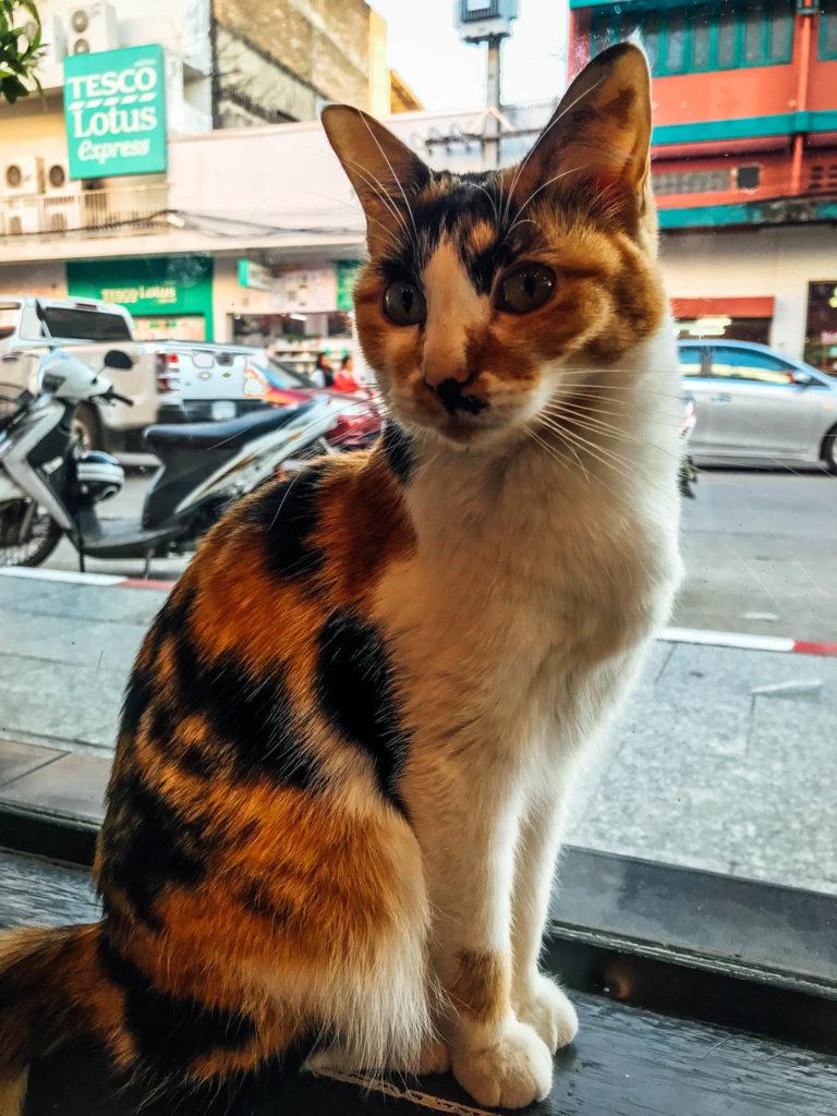 Un des chats du café