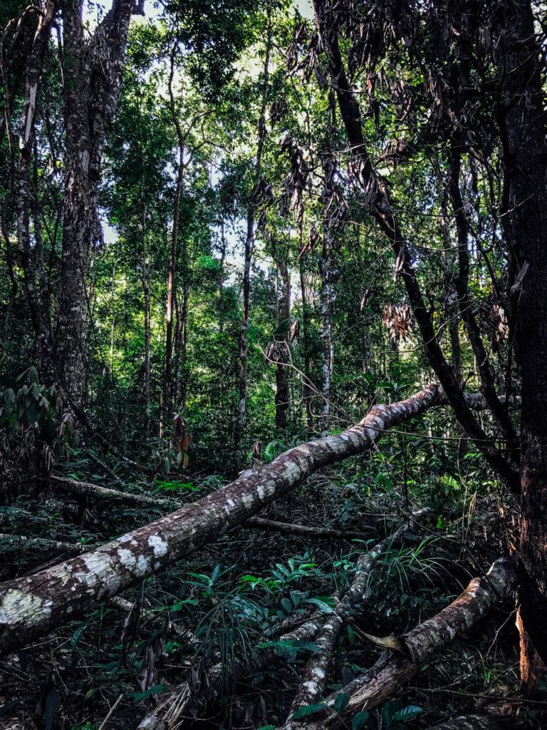 Dans la jungle thaïlandaise