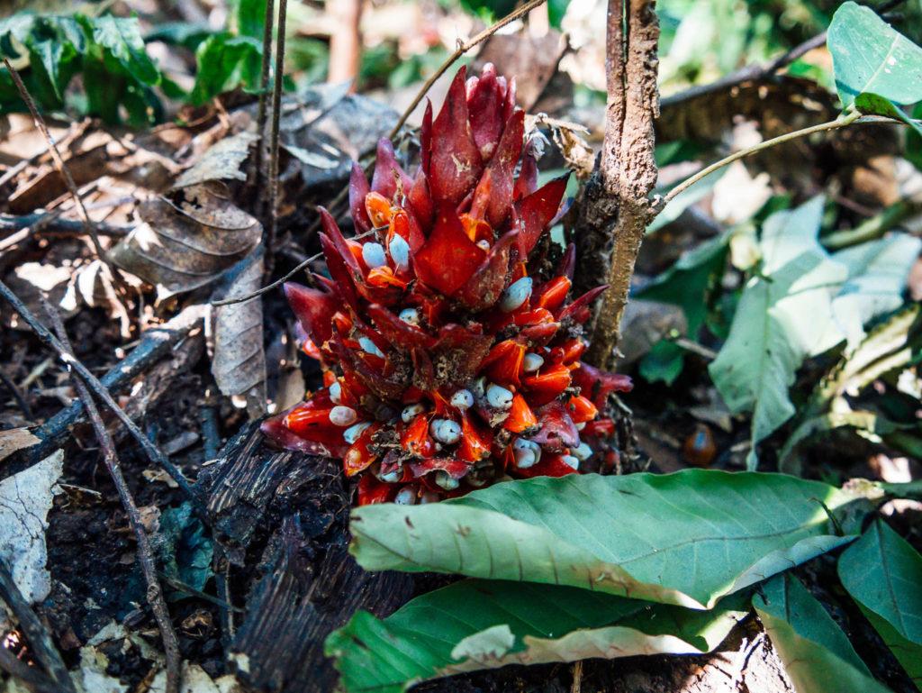 Des fleurs cachées dans la jungle