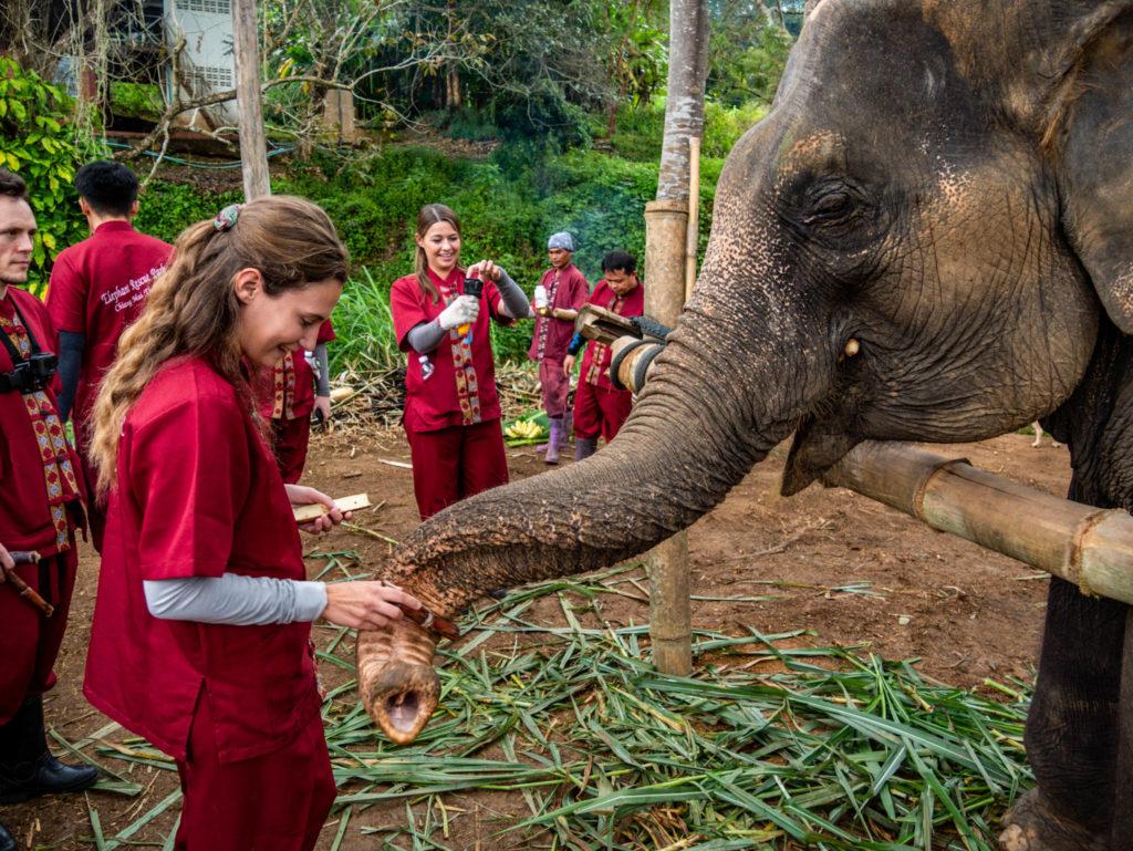 Les éléphants raffolent de canne à sucre