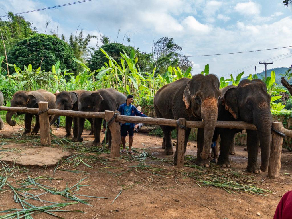 Les éléphants du centre