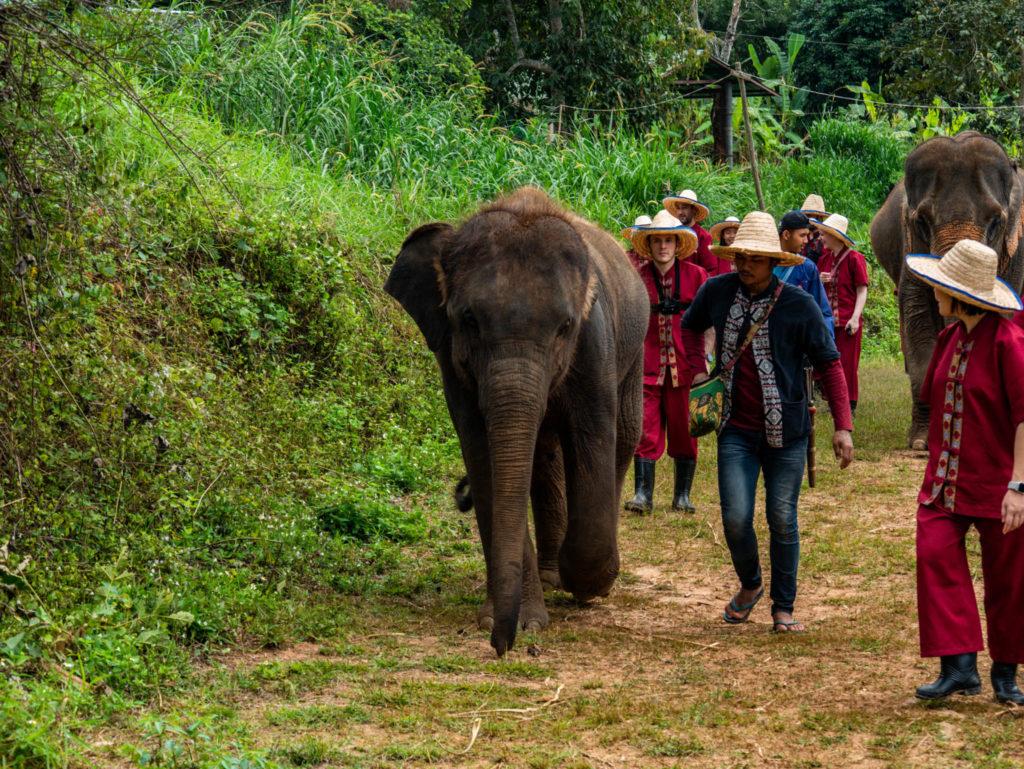 Balade avec les éléphants sans leur monter dessus