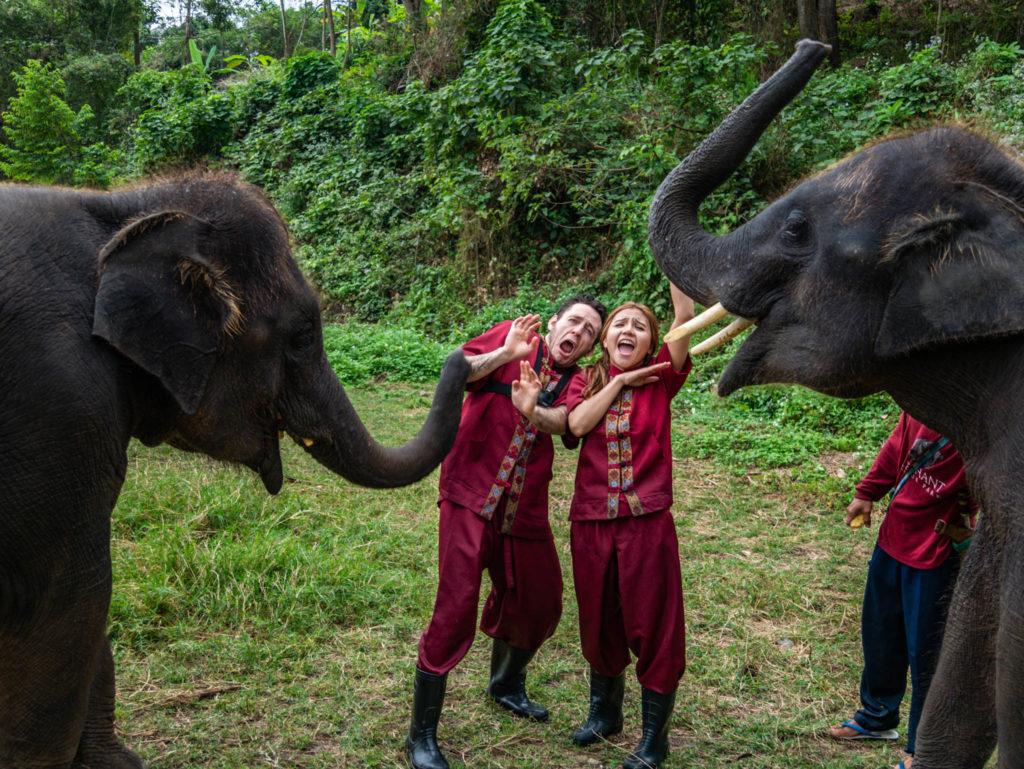 Les éléphants prennent la pose et les visiteurs aussi