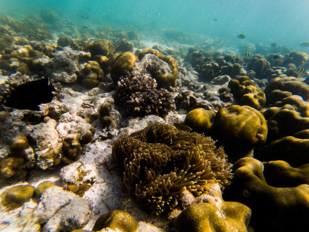 La tête dans les coraux