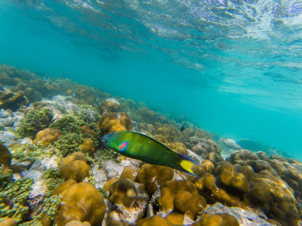 Un des nombreux poissons multicolors