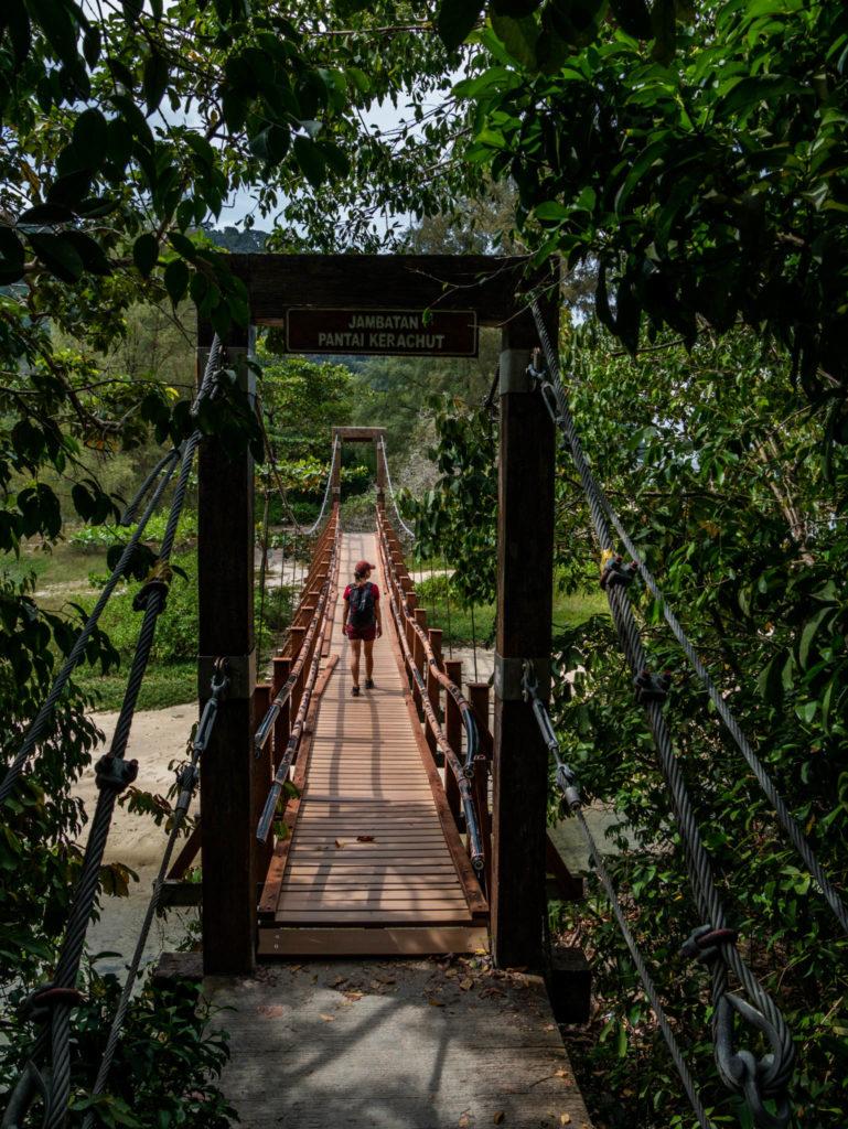 Un pont suspendu dans le parc national