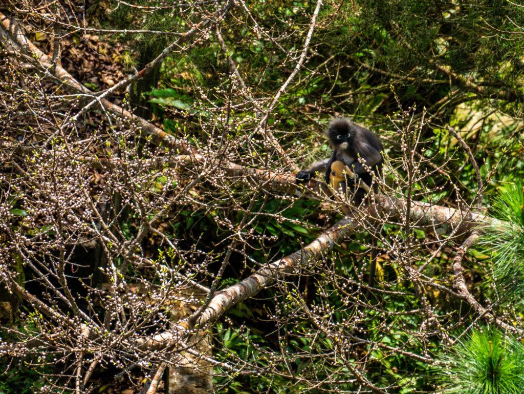 Un bébé singe se cache sur cette photo, saurez-vous le trouver ?