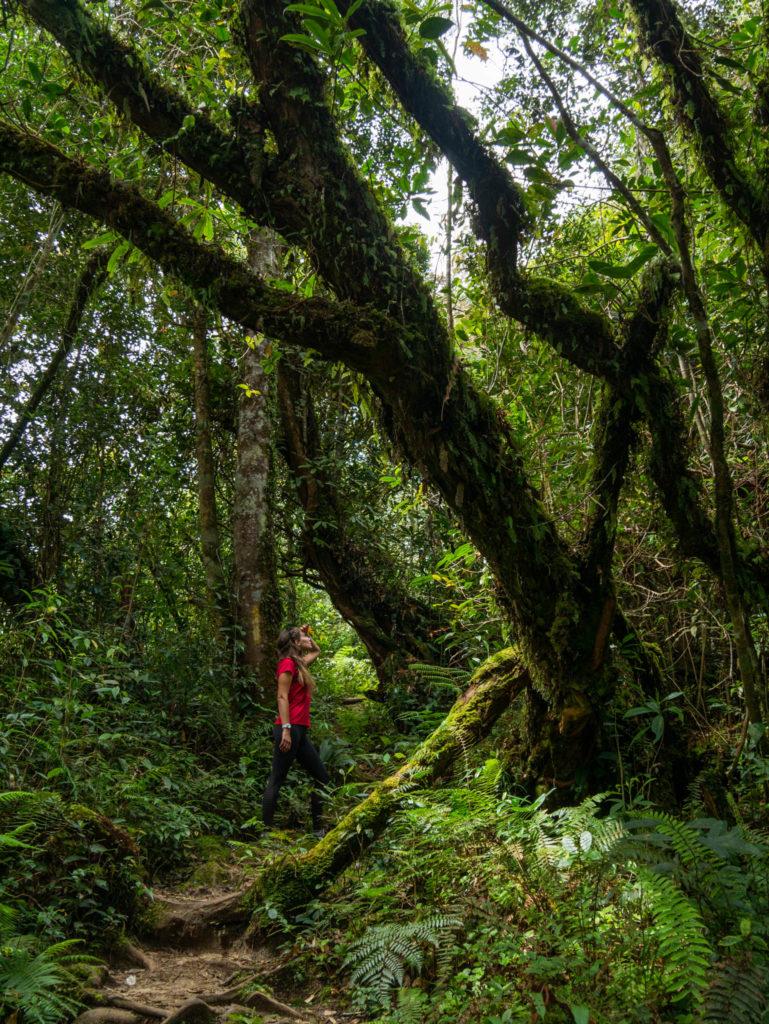 Dans la forêt vierge