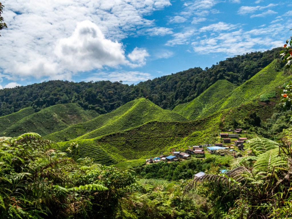 Le village où vivent ceux qui travaillent dans les plantations