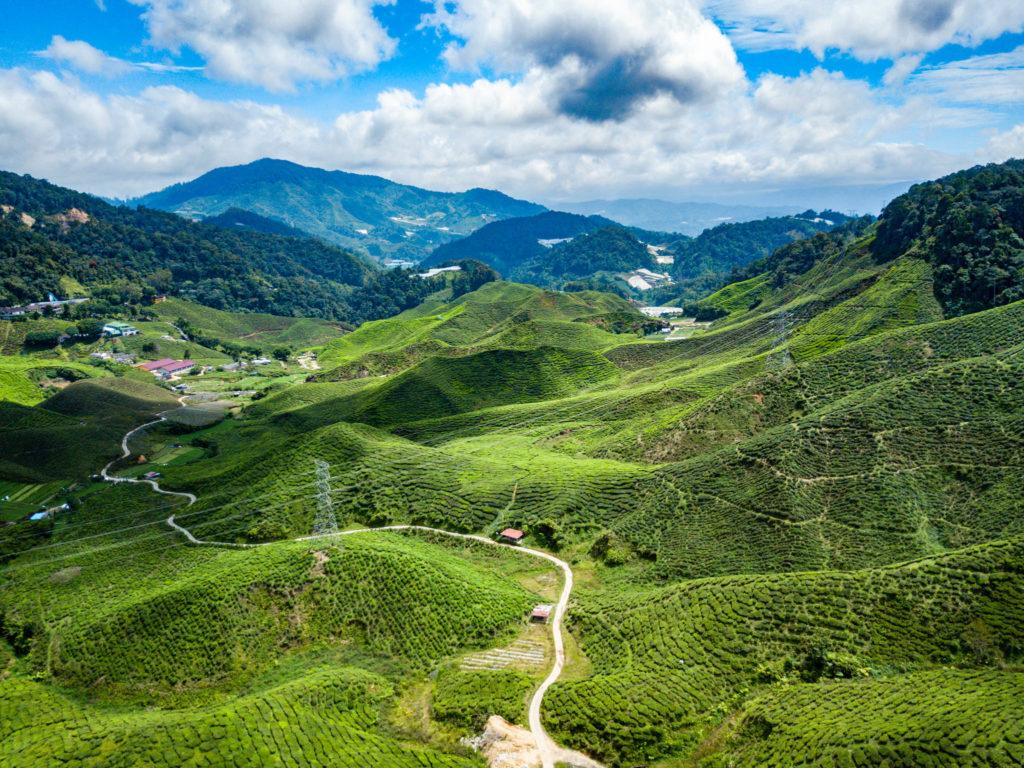 Une partie des plantations de thé vue du ciel