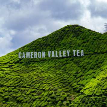 Perdus dans les plantations de thé des Cameron Highlands