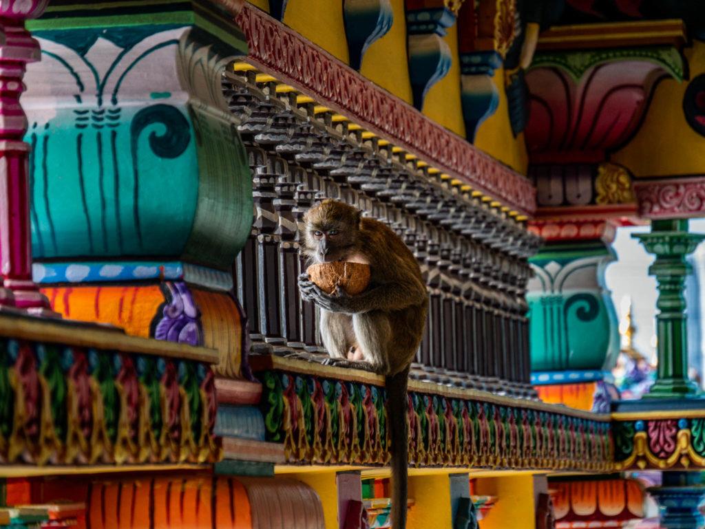 Les singes ont envahit le temple