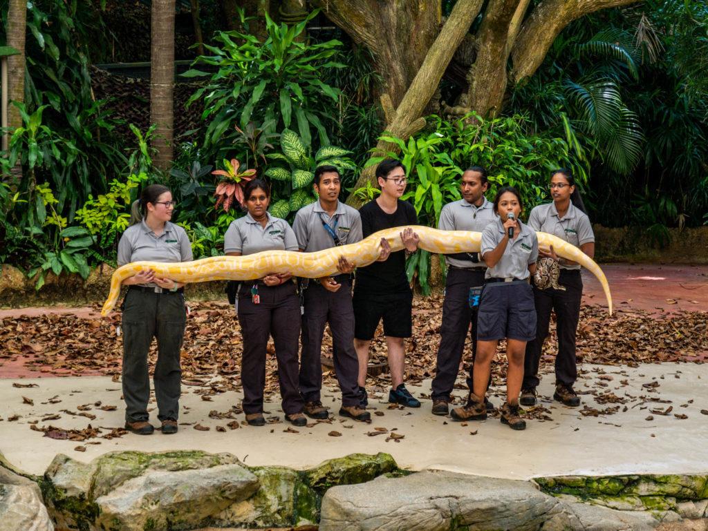 L'anaconda de 7 mètres