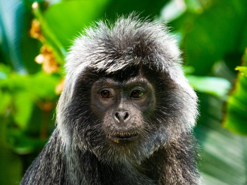 Un singe au visage tellement expressif