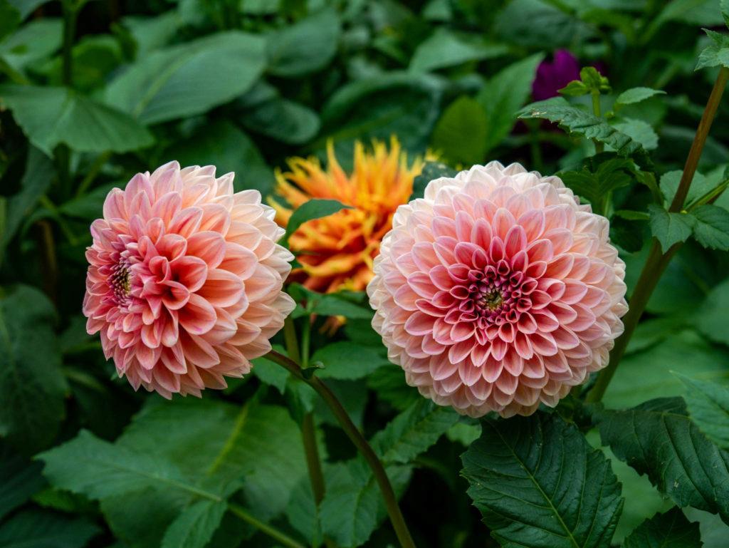 Une des nombreuses variétés de fleurs de la serre