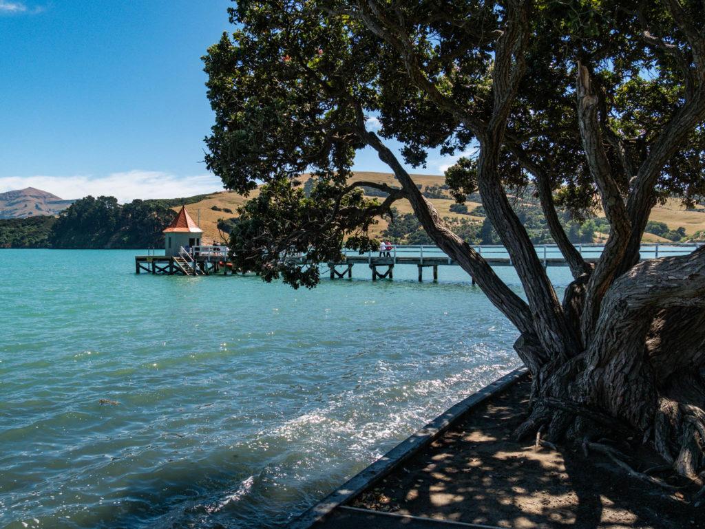 On profite du lac à l'ombre d'un arbre