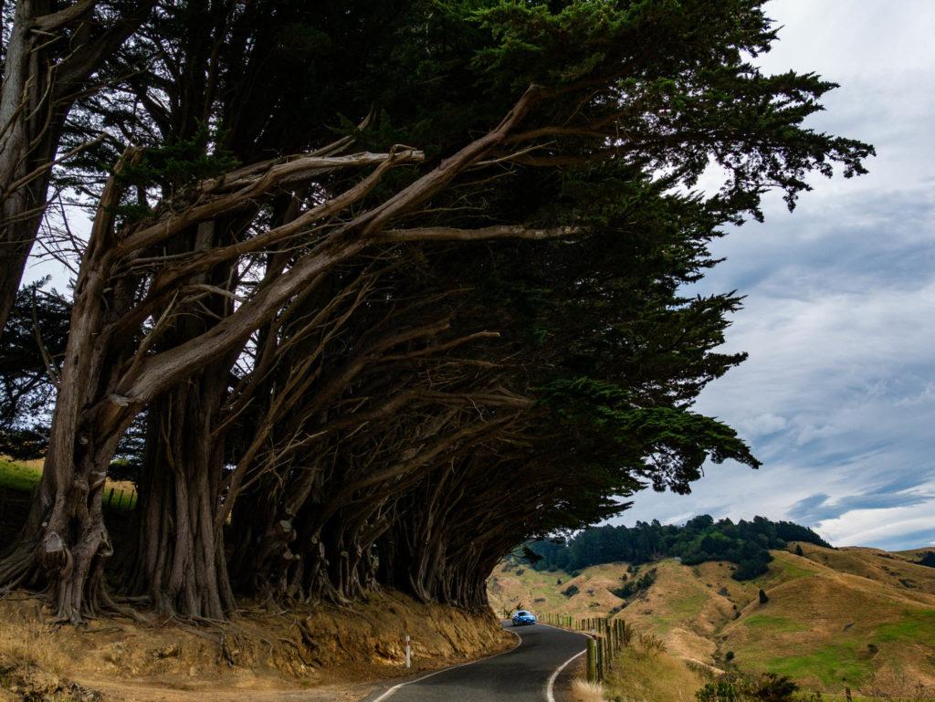 Sur la péninsule d'Otago