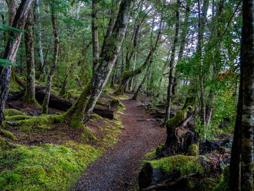 La forêt de mousse