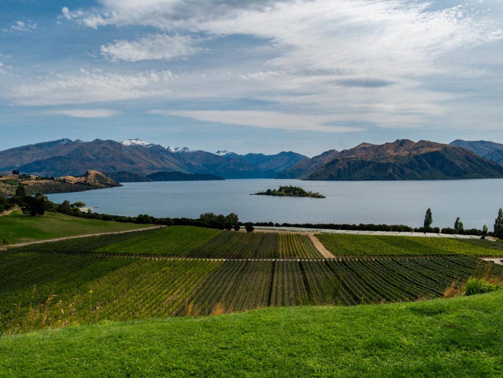 Le domaine viticole