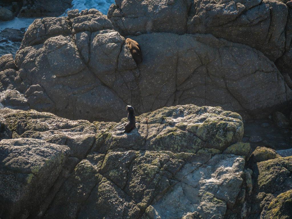 Un bébé sur un rocher