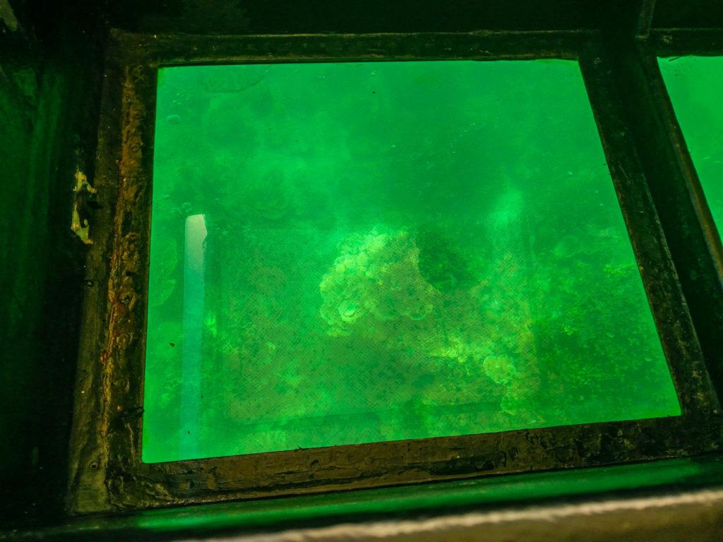 VUe du bateau à fond transparent
