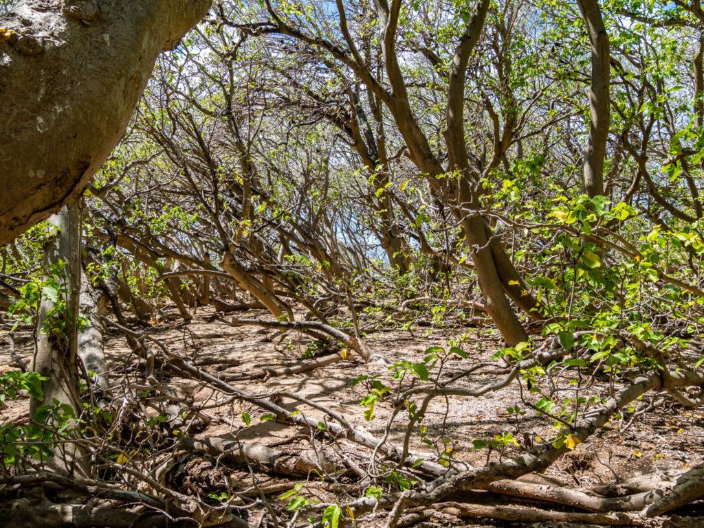 Les arbres de l'île