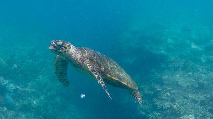 On a nagé avec des tortues et des requins !