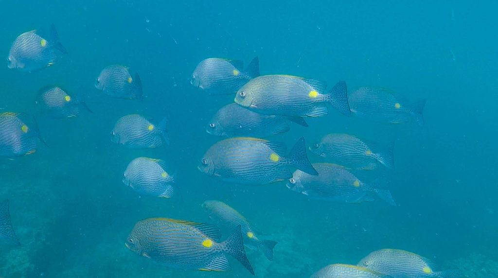 Un banc de poissons